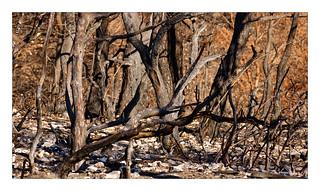 Provence - Brandwunden