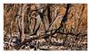 Provence - Brandwunden (Babaou) Tags: frankreich france provencealpescôtedazur provence wald waldbrand feuer vaucluse dxopl luberon2017 incendie