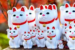 The lucky Cats of Gotokuji (Dakiny) Tags: 2017 winter december japan tokyo setagayaward gotokuji city street temple gotokujitemple autumnleaves autumncolors maple red bokeh d750 afsnikkor85mmf18g nikonafsnikkor85mmf18g