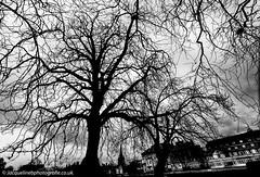 L Hiver _Angleterre (drjacquebaxter) Tags: trees skeleton winter yule hiver england bedford bedfordshire jacquelinebphotografiecouk jacquelinebaxter