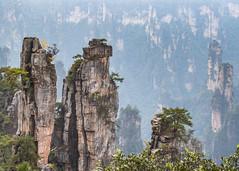 Old General (Oleg S .) Tags: haze rock tree zhangjiajie mountains hunan forest cliff china nature wulingyuan