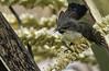 Birds in Backyards (OM-Digital) Tags: olympus omd em111 300mm f56 mft handheld highiso srilanka colombo birding urbanwetland wetlandbirds 2017 tourofsrilanka birdinginsrilanka birdsinbackyards homesweethome relaxing balcony