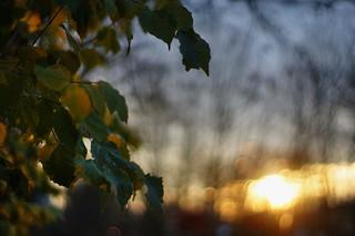 light on a fine december evening #1