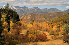 Mountain Aspens