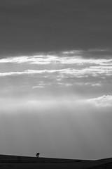 Serra da Canastra (Johnny Photofucker) Tags: serradacanastra minasgerais mg sãojoãobatistadoglória brasil brazil brasile bw pb preto branco black white nero bianco 100400mm noiretblanc céu sky cielo nuvem nuvole nuvens nuvola cloud clouds raiodesol sunlight lightroom paisagem landscape interior campagna rural natureza natura nature