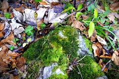 Busteni_48 (K06c) Tags: photography nature moss plants leaves closeup colours textures soil rocks