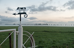 Cows to the left (Jorden Esser) Tags: nederlandvandaag friday middendelfland arrow cow farmfence fencefriday grass hff polder sign gate groundfog