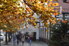 Last touch of autumn (navarrodave80) Tags: leaves golden sunpaint sunhighlight street bokeh nikon d3300 nikkor 50mm 50mm18d