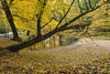 Autumn Tree (H.W_Werke) Tags: autumn wather leaves bench trees nature sigma1750mm pentax