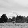 Hood Ranch (Aaron Bieleck) Tags: hasselblad500cm 120film analog 6x6 square film filmisnotdead hasselblad mediumformat wlvf 150mmct bw blackandwhite hoodriver oregon pnw pacificnorthwest mountain horse mthood clouds landscape trees filmgrain telephoto scenic