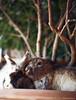 IMG_3869 (Protty coniglio nano) Tags: coniglio conigli castoro protty coniglietto coniglionano