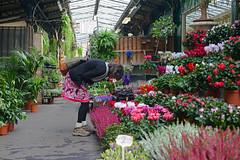 40 Years Later - 791 (simpsongls) Tags: france paris flower market ilcita garden smell
