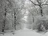 Howe Park Wood (ukstormchaser (A.k.a The Bug Whisperer)) Tags: howe park wood woods woodland tattenhoe milton keynes snowing winter december morning trees footpath weather uk