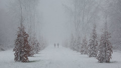 Winterwonderland (Alex Verweij) Tags: sneeuw park lumiere walking winter 2017 alexverweij december 10dec2017 lumierepark canon 5d marliii wandelaars sneeuwval sneeuwstorm beautiful nice wandelen almere stad weerwater