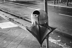 (Feininger's Cat (Thanks for 1.3 million views!)) Tags: meinfilmlab summaritm50mmf24 leica bessar3m kodaktmax400 film abandoned blackandwhite analog fullframe leicasummaritm12450 summarit summarit50 50mm leicam rangefinder messsucher