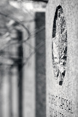 Remebrance Day / Jour du souvenir- Belmont (baldenbe (on/off)) Tags: bw nb noiretblanc blackand white nikon d700 micronikkor135mm remebranceday jourdusouvenir tombe tomb militaire military army armée armistice 11novembre novbember11th belmont québec canada