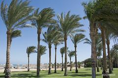 Palm beach (Artur Rydzewski) Tags: water tree ocean beach sea palmtree coast outdoor flora palm boat vacation nature shore flying outdoors tropics tropical blue traveling board palmbeach