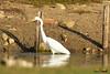 A-LUR_1981 (OrNeSsInA) Tags: trasimeno uccelli bird natura italia umbria castiglionedellago ornessina lucarosi nikon tamron byrd lago chiusi siena perugia aironi cormorani