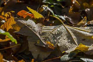 Regentropfen Herbstwald