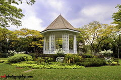 Botanic Gardens, Singapore (rvk82) Tags: 2016 botanicgardens december december2016 greenery landscape nature nikkor1424mm nikon nikond810 rvk rvkphotography raghukumar raghukumarphotography singapore wideangle wideangleimages rvkonlinecom rvkphotographycom sg