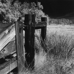 Fence and Meadow (bluechromis1) Tags: mamiya330c sandyriverdeltapreserve blackandwhite sandy river delta park oregon infrared analog selfdeveloped homesouped instantmytolascorbate film analogue mediumformat 6x6 tlr squarenegative finegrained rolleiretro80s hoyar72 troutdaleoregon