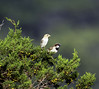 IMG_9132 (ibzsierra) Tags: ave bird oiseau ibiza eibissa baleares canon 7d sañlinas parque natural tamron sp 150600mm f563 di vc usd g2 a022