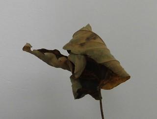 Herbsttroll, Lockvogel