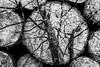 Destinée (Briren22) Tags: arbres coupe bois automne superposition