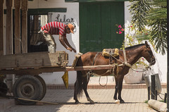 Début de chargement (Rosca75) Tags: colombia colombie people lifestylephotography mompox mompós horse carriage