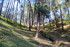 hagiang - amazing pine hill