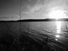 Evening Sun (jondewi52) Tags: black blackandwhite clouds cloud dusk evening fjällsjö grass jämtland landscape monochrome nature no norrland nofilter nophotoshop photoshop river riverbank sky sun sunset outdoor outdoors white