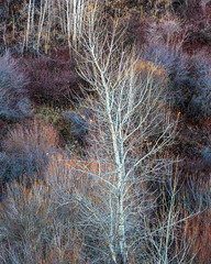 blacks creek-11-27-17-39 (Ken Folwell) Tags: trees fallcolors sagebrush willows chokecherries pinetrees idaho canon5dmkiii