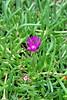 (facebook.com/DorotaOstrowskaFoto) Tags: ogródbotaniczny kwiaty
