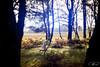 Unravel, Part 11 (pprzystup) Tags: running yarn thread girl light morning sunrise glare glow violet lens frame framing fern barefoot