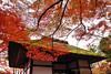 京都 嵐山 常寂光寺 (Emy Lam) Tags: 京都 嵐山 常寂光寺 jotokojitemple arashiyama kyoto japan