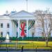 2017.12.01 Red Ribbon at the White House, World AIDS Day, Washington, DC USA 1129