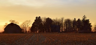 golden hour at the Raccoon House