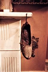 The Persian slipper (photo copyright Jean Upton, 1987)