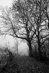 The end is near (gambajo) Tags: trees nature fog blackandwhite blackwhite dramatic dreamy fall autumn weilerswist erft