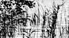 Am Nehmitzsee (photalena) Tags: reeds nature bw fotoexkursion naturparkstechlin trioplan28100 cof006step cof006dmnq