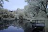 Brookline IR_20170617_039 (falconn67) Tags: brookline massachusetts newengland pond hallspond sanctuary amorywoods swamp cedarswmp infrared canon 7d 24105mml