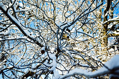 WHITE CHRISTMAS (janette_j) Tags: ogden utah merry christmas winter tis season ektar 100 pushed 2 stops nikon n65 frost cold