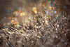 Kaleidoscope Jewels (Ania Tuzel Photography) Tags: meadow sparkly cold sunlit light morning kaleidoscope bokeh frost grandtetonnationalpark sunrise