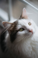 330/365 (Garen M.) Tags: dogs chip buttercup turkishvan cats nikond850 antics vans nikkor105mmf28macro jojo jerry ella