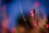 Autumn Flowers (NathalieSt) Tags: europe france hérault lagrandemotte languedocroussillon occitanie automne autumn city feuille feuilles fleur fleurs flower flowers leaf leaves nature nikon nikond750 nikonpassion nikonphotography ville
