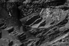 Short Sand Beach (Tony Pulokas) Tags: oregon oswaldweststatepark capefalcon shortsandbeach beach smugglerscove autumn fall rock tilt shift blur bokeh barnacle acornbarnacle