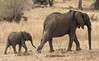Marching On ... (AnyMotion) Tags: africanelephant afrikanischerelefant loxodontaafricana elephant elefant mother baby moving 2015 anymotion tarangirenationalpark tanzania tansania africa afrika travel reisen animal animals tiere nature natur wildlife 7d2 canoneos7dmarkii ngc npc