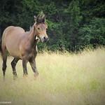 happy alp horse thumbnail
