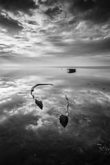 Delta Dreams B&W VI. (dasanes77) Tags: canoneos6d canonef1635mmf4lisusm tripod landscape seascape cloudscape dramaticsky sea ocean reflections shadows boat abandoned deltadreams tarragona