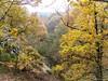L' Arnon dans la vallée des fougères - Sidiailles - Berry - Centre-Val de Loire - France (vanaspati1) Tags: l arnon dans la vallée des fougères sidiailles berry centreval de loire france vanaspati1 nature paysage europe arbres trees